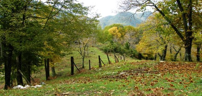 Sentiero del castagno